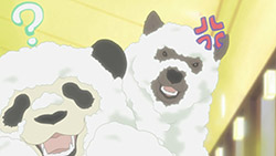 Shirokuma Cafe   11   29