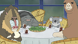 Shirokuma Cafe   12   23