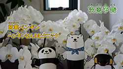 Shirokuma Cafe   21   Preview 01