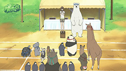 Shirokuma Cafe   24   16